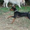 Brutus (puppy boy)_010