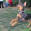 Brutus (puppy boy)_016