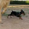Brutus (puppy boy)_008