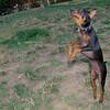 Brutus (puppy boy)_017