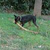 Brutus (puppy boy)_011