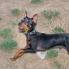 Brutus (puppy boy)_013