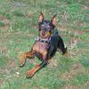 Brutus (puppy boy)_012