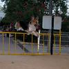 Barney, fence, gate, leap, jump, ayora