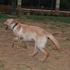 Byron (boy puppy)_001