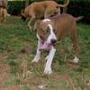 Aster (boy puppy)_003
