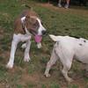 Aster (boy puppy)_004
