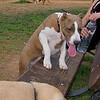 Aster (boy puppy)_001