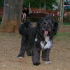 Coco (boy puppy)_002