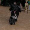 Coco (boy puppy)_001