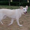 Ayora dogs_002