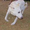 Ayora dogs_003