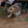 Nela (girl puppy)_001