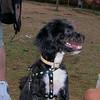 Coco (boy puppy)_004