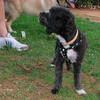 Coco (boy puppy)_005
