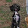 Coco (boy puppy)_003