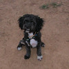 Coco (boy puppy)_007