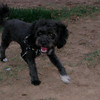Coco (boy puppy)_008