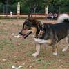 Ayora dogs_010