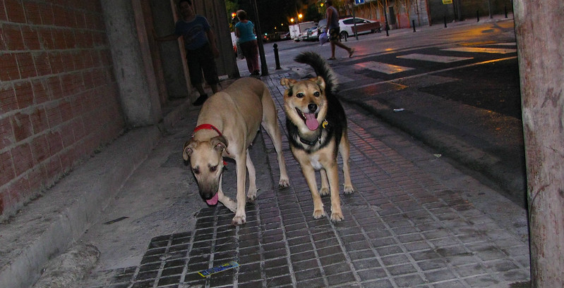 Mimi, Maddie (walk home)_002