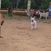 Ayora dogs_004