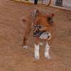 Ayora dog (11 yr girl)_002