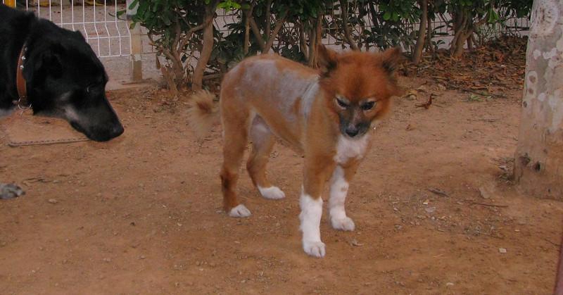 Ayora dog (11 yr girl)_001