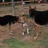 Ayora dog, Kiwi, Maddie_001