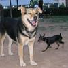 Brutus (boy pup), Maddie_001