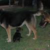 Brutus, Tina, Maddie_001