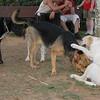 Ayora dog, Kiwi, Sombra_001