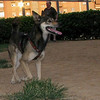 Bruno (boy, 3yrs )_007