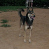 Bruno (boy, 3yrs )_006