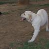 Ayora Dog, Chete_002