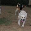 Ayora Dog, Chete_001