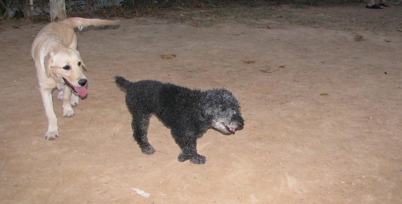 Ayora Dog, Nela_001