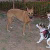 Ayora dogs, Lisa, Salomon_001