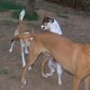 Ayora dogs, Lisa, Salomon_002
