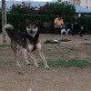 Bruno (boy, 3 yr )_001