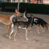Bruno, Lisa, Maddie_001