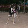 Bruno (boy, 3 yr )_003