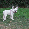 Ayora french bulldog girl_003