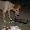 Brutus, other dog_001