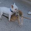 Sasha elian's puppy 2 m_002