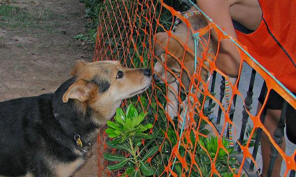 Sasha (girl puppy), Maddie_002