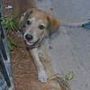 Sasha elian's puppy 2 m_006
