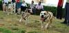 ayora park dogs