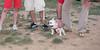 Alice (girl, french bulldog, pup, new)_007