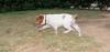 Chupi (boy, puppy, 1st time)_001