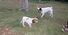 Chupi (boy, puppy), West (boy)_001